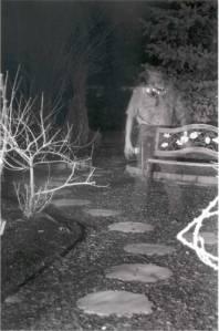 garden_ghost